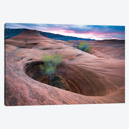 Cottonwood Tree In Hole, Grand Staircase-Escalante National Monument, Utah II Canvas Print #JFF2} by Jeff Foott Canvas Art Print