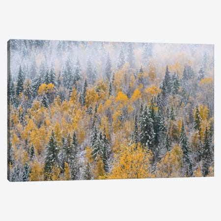 Forest after autumn snowfall, Wells Gray Provincial Park, British Columbia, Canada Canvas Print #JFF38} by Jeff Foott Art Print
