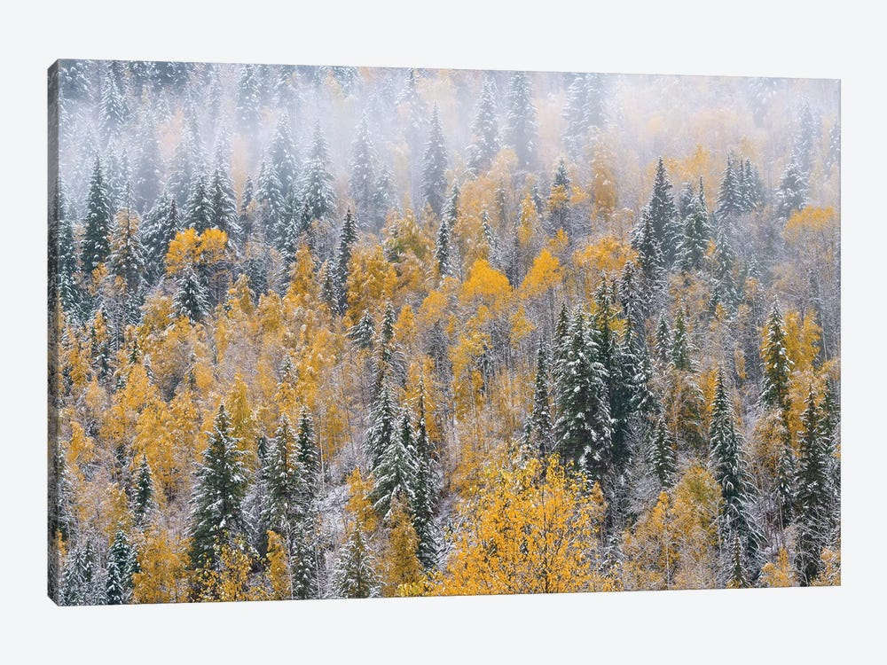 Forest after autumn snowfall, Wells Gray Provincial Park, British Columbia, Canada by Jeff Foott 1-piece Canvas Wall Art