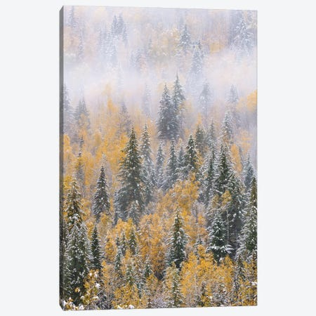 Forest after snowfall in autumn, Wells Gray Provincial Park, British Columbia, Canada Canvas Print #JFF39} by Jeff Foott Art Print