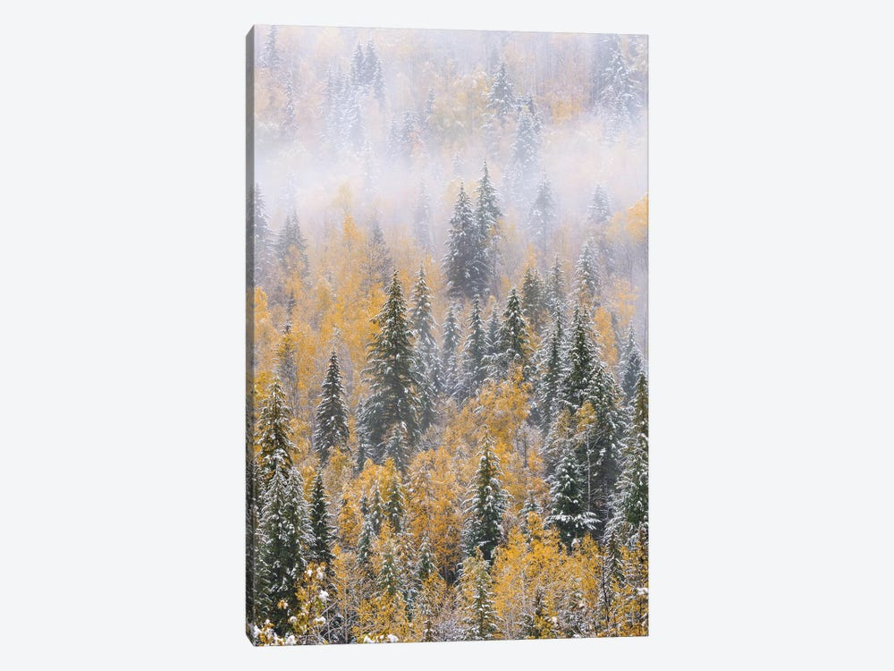 Forest after snowfall in autumn, Wells Gray Provincial Park, British Columbia, Canada by Jeff Foott 1-piece Canvas Art Print