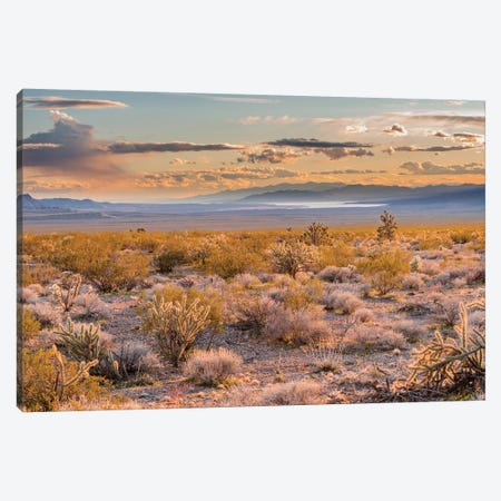 Desert, Lake Mead, Gold Butte National Monument, Nevada Canvas Print #JFF3} by Jeff Foott Canvas Art Print