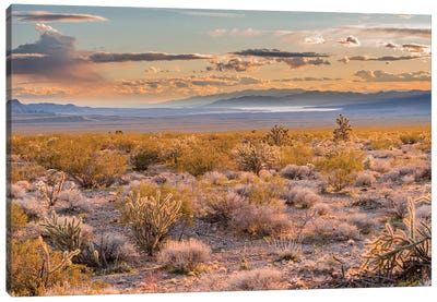 Desert, Lake Mead, Gold Butte National Monument, Nevada Canvas Art Print