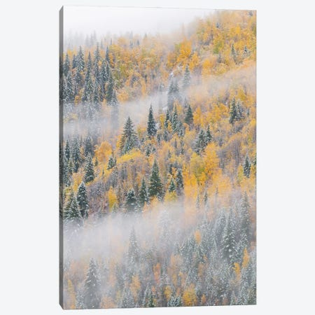Forest after snowfall in autumn, Wells Gray Provincial Park, British Columbia, Canada Canvas Print #JFF40} by Jeff Foott Canvas Art