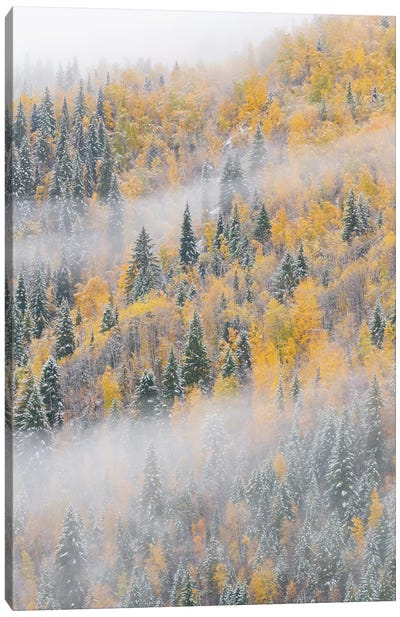 Forest after snowfall in autumn, Wells Gray Provincial Park, British Columbia, Canada Canvas Art Print