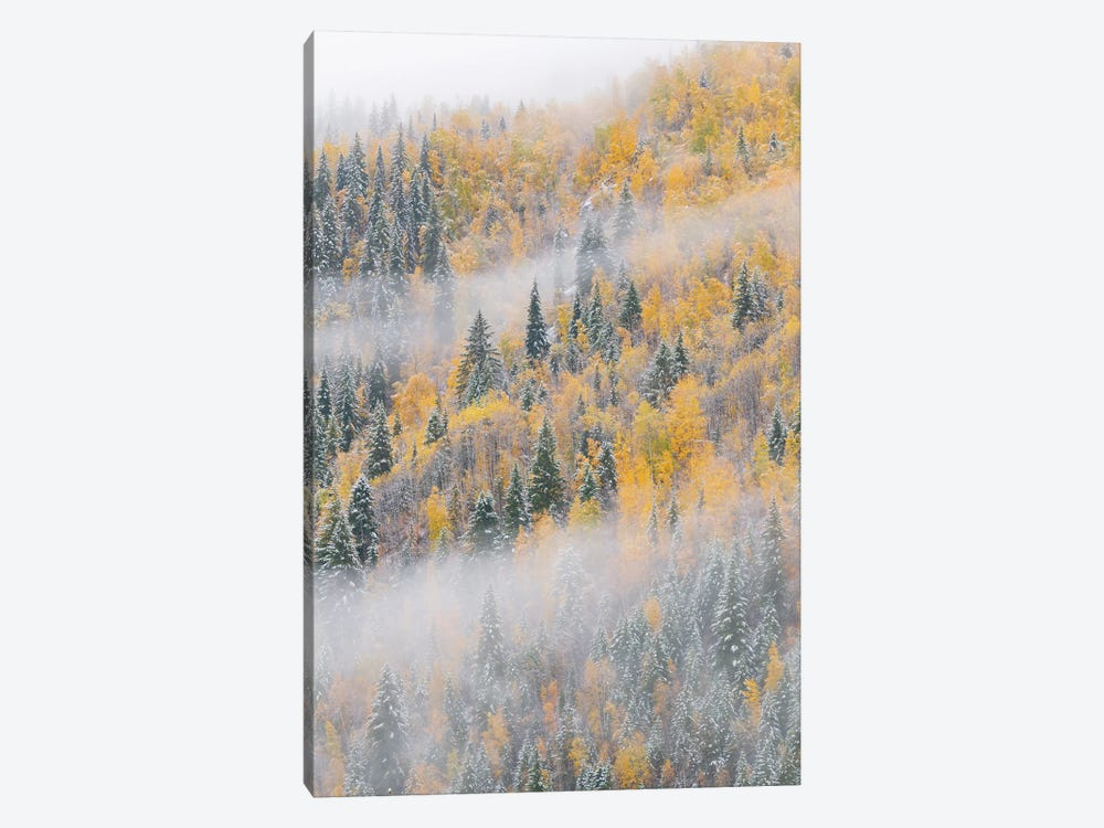 Forest after snowfall in autumn, Wells Gray Provincial Park, British Columbia, Canada by Jeff Foott 1-piece Canvas Print