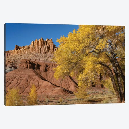 Fremont Cottonwood trees and rock formation, The Castle, Capitol Reef National Park, Utah Canvas Print #JFF41} by Jeff Foott Canvas Wall Art