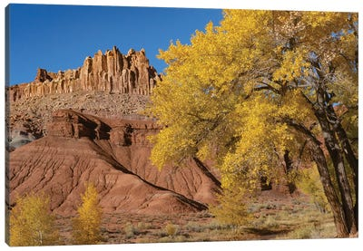 Fremont Cottonwood trees and rock formation, The Castle, Capitol Reef National Park, Utah Canvas Art Print