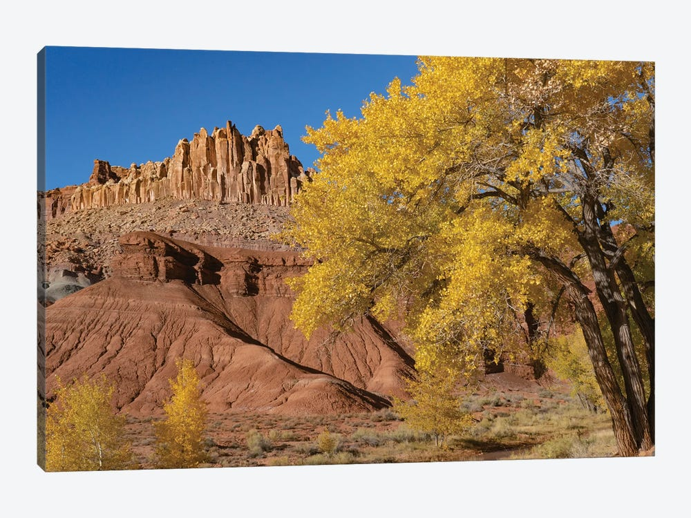 Fremont Cottonwood trees and rock formation, The Castle, Capitol Reef National Park, Utah by Jeff Foott 1-piece Canvas Art