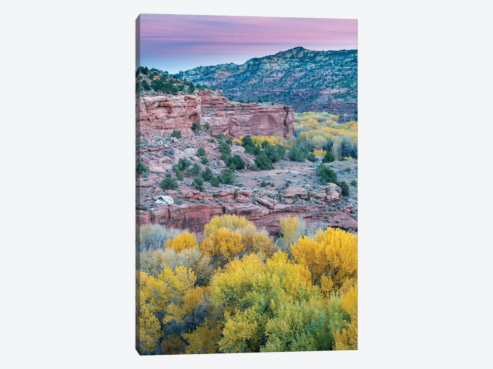 Fremont Cottonwood trees in autumn, Grand Staircase-Escalante National Monument, Utah by Jeff Foott 1-piece Canvas Wall Art