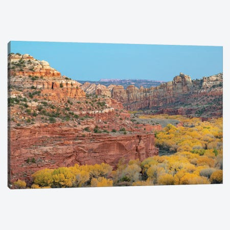 Fremont Cottonwood trees in autumn, Grand Staircase-Escalante National Monument, Utah Canvas Print #JFF44} by Jeff Foott Canvas Art Print