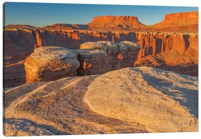 Junction Butte in Monument Basin at sunrise, Canyonlands National Park, Utah Canvas Art Print