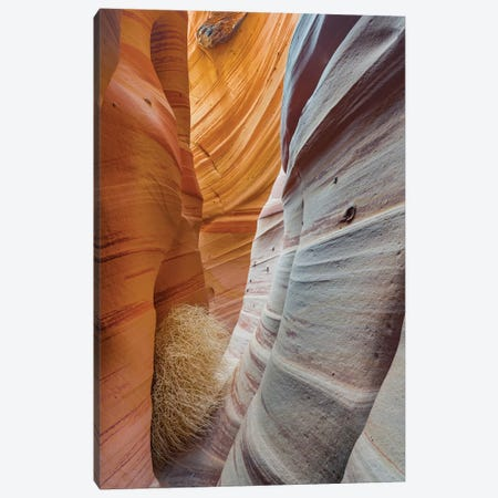 Slot Canyon, Zebra Canyon, Grand Staircase-Escalante National Monument, Utah 3-Piece Canvas #JFF7} by Jeff Foott Canvas Artwork