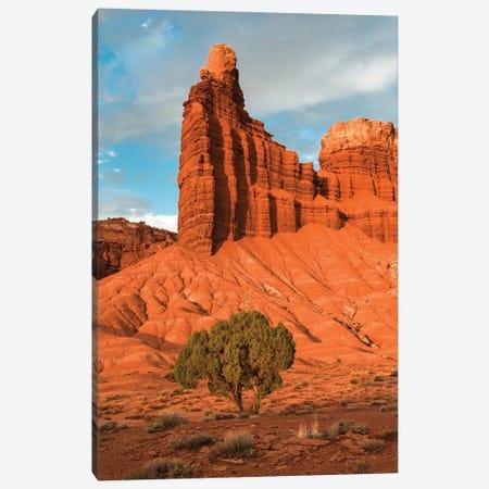 Utah Juniper tree and rock formation, Capitol Reef National Park, Utah Canvas Print #JFF99} by Jeff Foott Canvas Print
