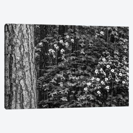 Usa, California, Yosemite, Dogwoods Canvas Print #JFO47} by John Ford Canvas Art