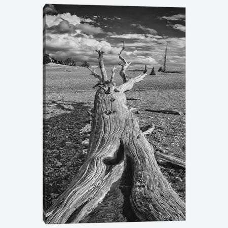 Usa, Eastern Sierra, White Mountains, Bristlecone Pines Canvas Print #JFO64} by John Ford Canvas Wall Art