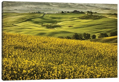 Europe, Italy, Tuscany, Val D'Orcia Canvas Art Print
