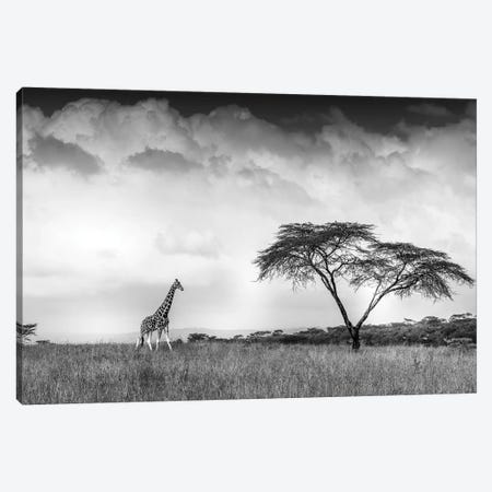 And I Dreamed Of Africa Canvas Print #JFS10} by Jeffrey C. Sink Canvas Artwork