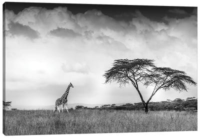 And I Dreamed Of Africa Canvas Art Print