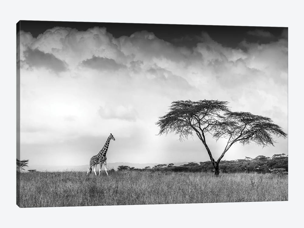 And I Dreamed Of Africa by Jeffrey C. Sink 1-piece Art Print