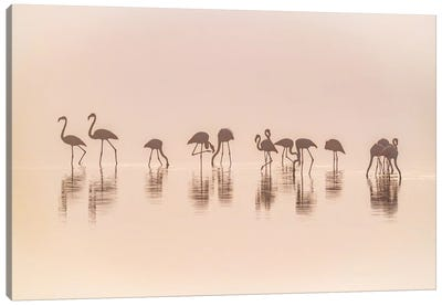 Flamingos In The Mist Canvas Art Print