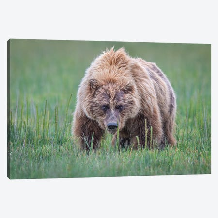 Coming Right At You Canvas Print #JFS27} by Jeffrey C. Sink Canvas Wall Art