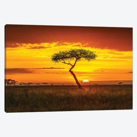 Primordial Africa Canvas Print #JFS30} by Jeffrey C. Sink Canvas Artwork