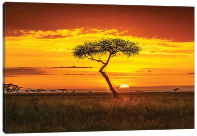 Primordial Africa Canvas Art Print