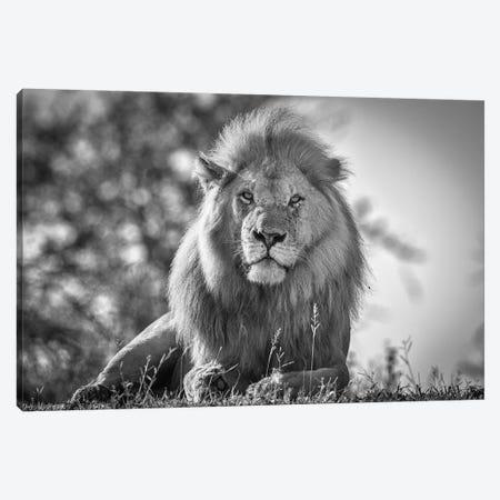 Monochromatic Lion King Canvas Print #JFS4} by Jeffrey C. Sink Canvas Art
