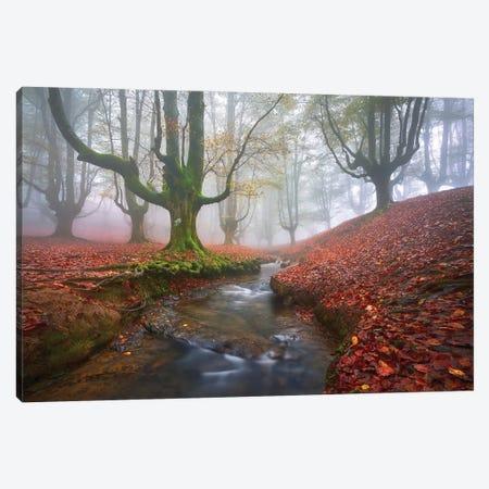 Misty Morning In Otzarreta Canvas Print #JGA16} by Jesús M. García Canvas Wall Art