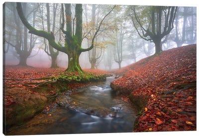 Misty Morning In Otzarreta Canvas Art Print
