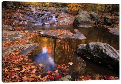 Autumn Landscape, Whiteoak Canyon, Shenandoah National Park, Virginia, USA Canvas Art Print