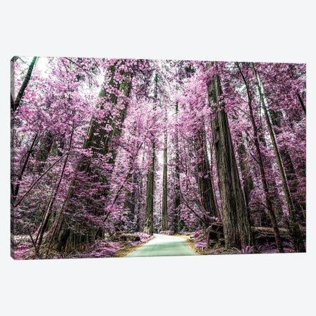 A Purple Forest Canvas Print #JGL103} by Joseph S. Giacalone Canvas Artwork