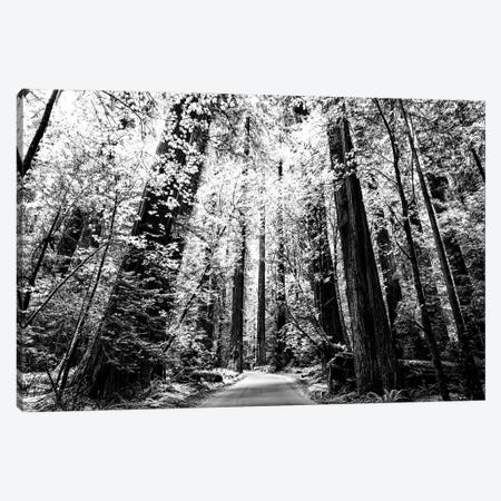 Magical Monochrome Forest Canvas Print #JGL123} by Joseph S. Giacalone Canvas Artwork
