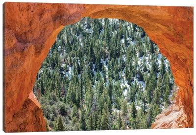 A Nature Lens Canvas Art Print