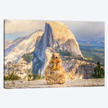 A Squirrel And Half Dome Canvas Print #JGL22} by Joseph S. Giacalone Canvas Print