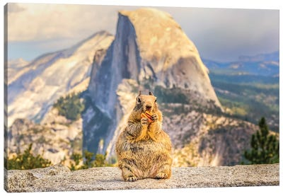 A Squirrel And Half Dome Canvas Art Print