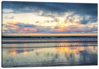 A Beach For The Birds Canvas Art Print