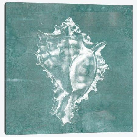 Solitary Shell I Canvas Print #JGO104} by Jennifer Goldberger Art Print