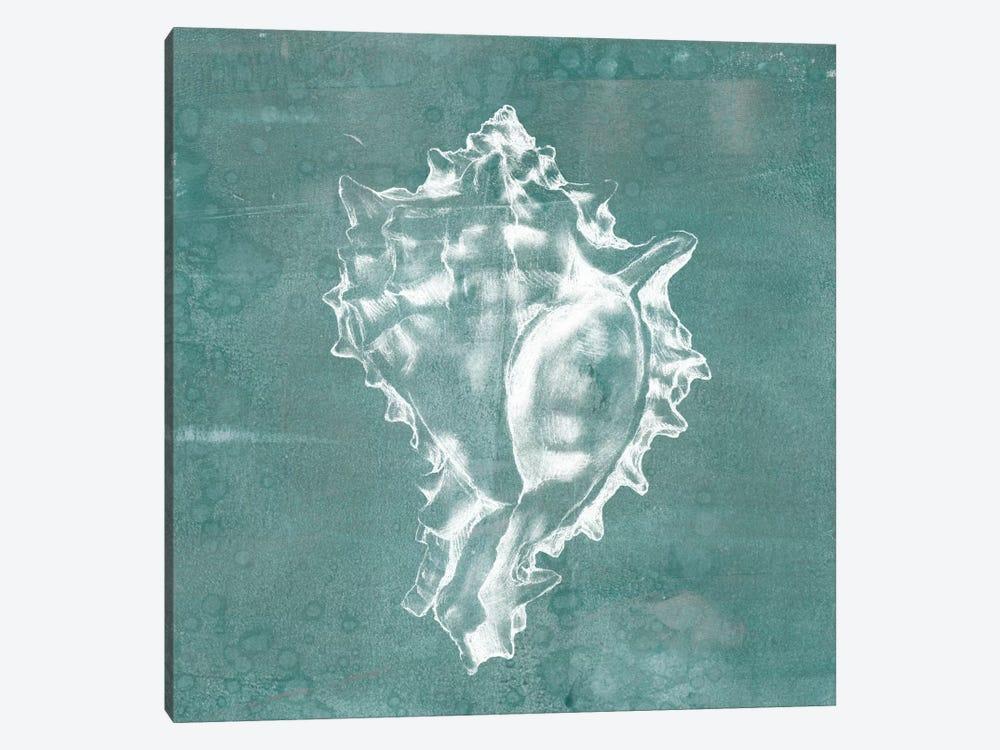 Solitary Shell I by Jennifer Goldberger 1-piece Canvas Art Print