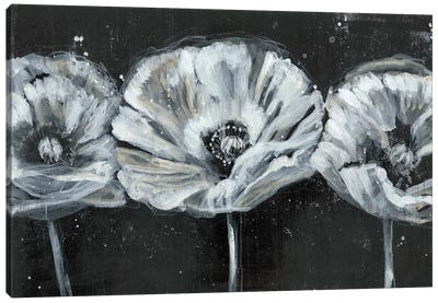 White Trio on Black II Canvas Art Print