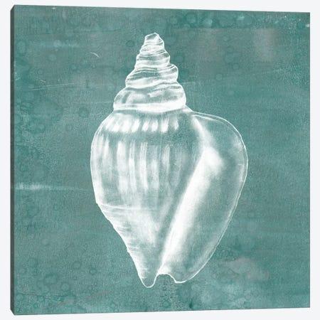 Solitary Shell II Canvas Print #JGO105} by Jennifer Goldberger Canvas Print