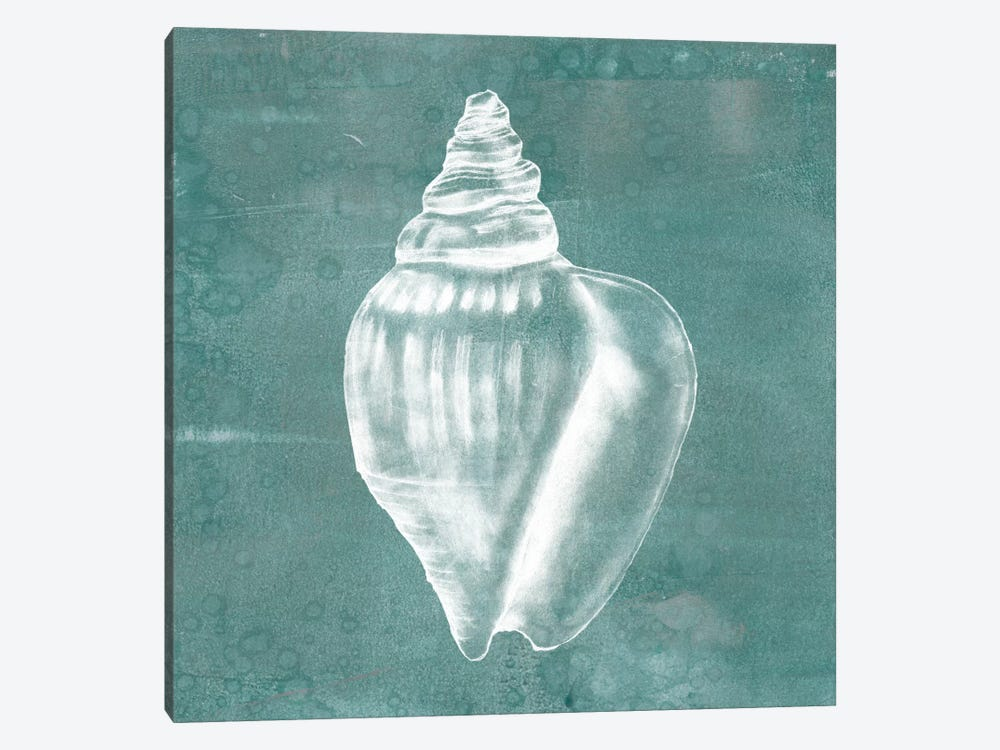 Solitary Shell II by Jennifer Goldberger 1-piece Canvas Artwork