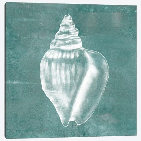 Solitary Shell II Canvas Print #JGO105} by Jennifer Goldberger Canvas Print