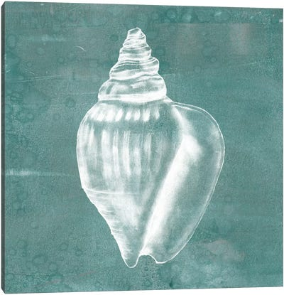 Solitary Shell II Canvas Print #JGO105