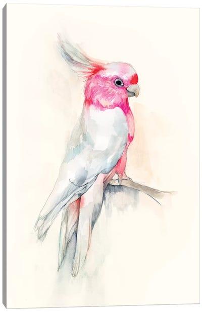 Opera Cockatoo I Canvas Art Print