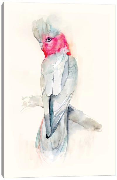Opera Cockatoo II Canvas Art Print