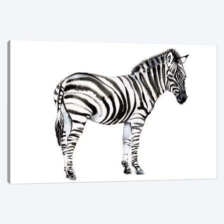 Standing Zebra I Canvas Print #JGO1088} by Jennifer Goldberger Art Print