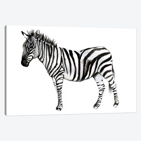 Standing Zebra II Canvas Print #JGO1089} by Jennifer Goldberger Canvas Print