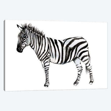Standing Zebra II Canvas Print #JGO1089} by Jennifer Goldberger Canvas Print